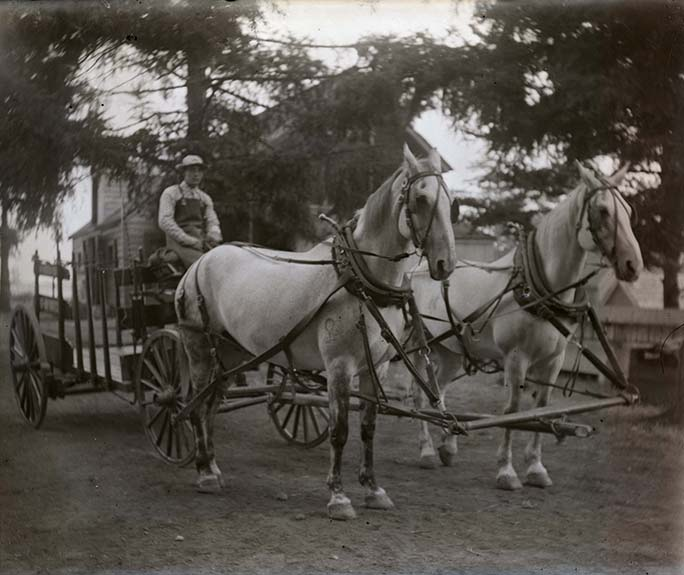 Sylvester delivery horses. (L.18497)